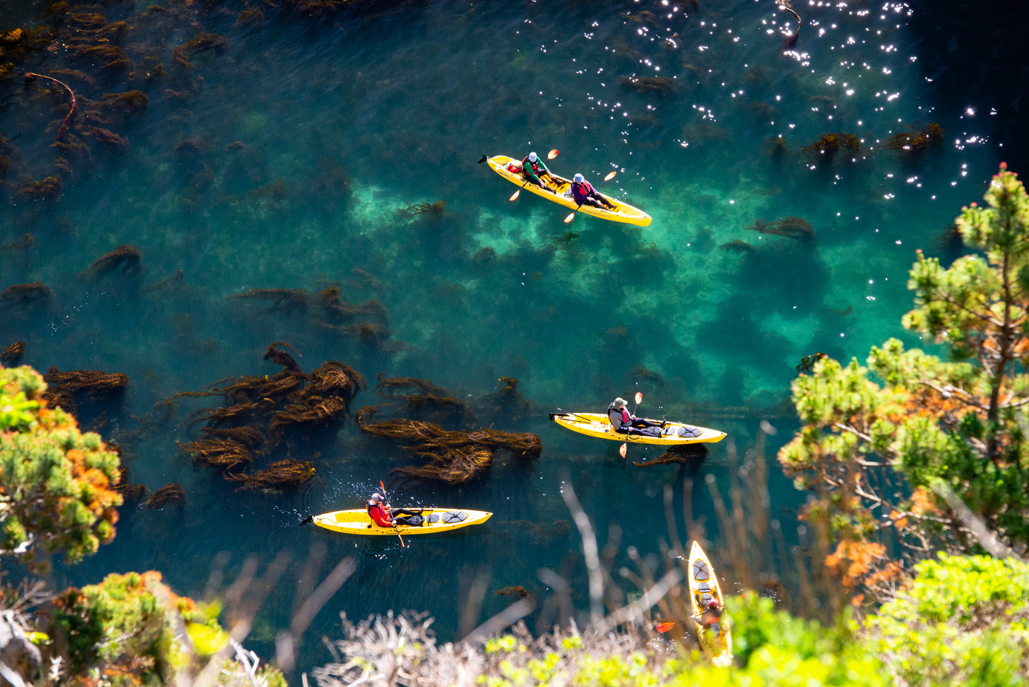 Kayakers in a cove near Port Orford, Oregon full of healthy kelp
